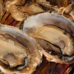 たった12kcal!牡蠣にたっぷり含まれる栄養素がスゴい