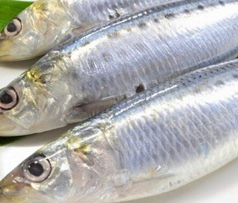 積極的にとりたい食材!生理対策に青魚がいい理由