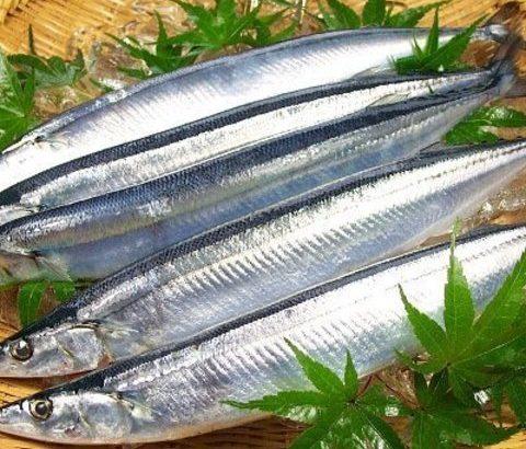 ダイエットにはサンマが最適!?青魚の栄養価とその活用法とは
