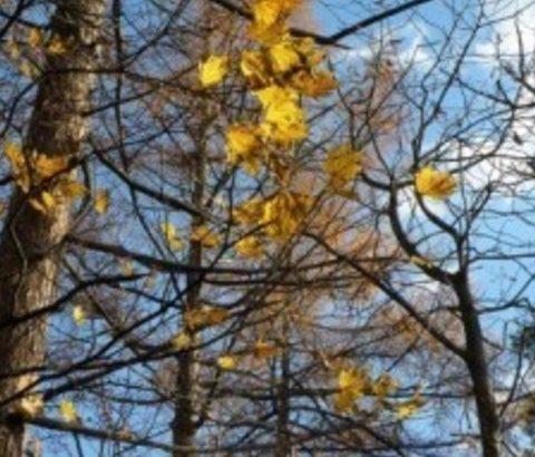 冬の乾燥もニキビの原因に!季節ごとの湿度調節で防止しよう