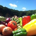 夏野菜で美味しくダイエット♪旬の野菜を楽しむダイエットレシピをご紹介!