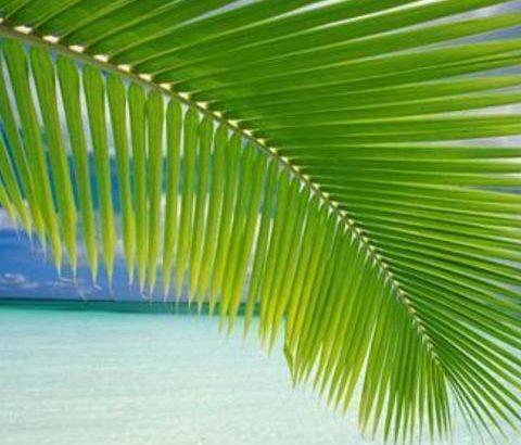 分泌腺の一つ、エクリン汗腺を知って夏のワキガ・多汗症の対策を